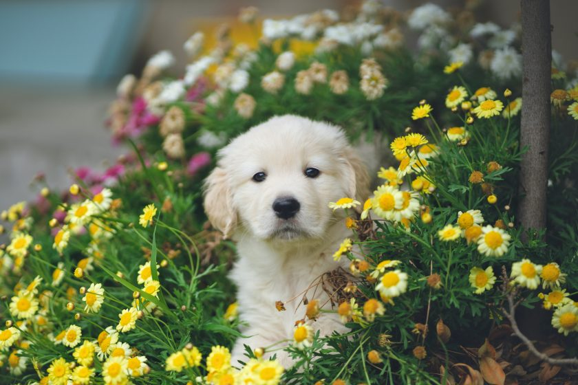 How To Get Rid Of Fleas On Puppies_fleacures